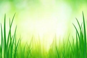 Ecogestione: presentazione delle Linee guida Assolombarda sul Sistema di gestione ambientale nella prevenzione dei reati ambientali ex D.Lgs. n. 231/2001 - Incontro, 16 maggio