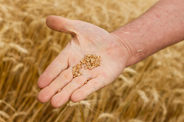Ccnl industria alimentare accordo di rinnovo del ccnl for Ccnl legno e arredamento piccola e media industria