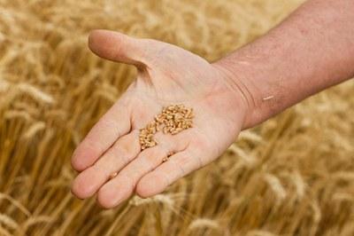CCNL Industria alimentare – Accordo di rinnovo del CCNL
