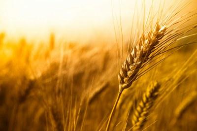 CCNL Industria alimentare - Fondo Assistenza Sanitaria Alimentaristi