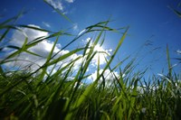 Expo 2020 Dubai: alberi solari e materiale riciclato nell'ottica sostenibile
